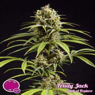 Philosopher Seeds - Jack El...