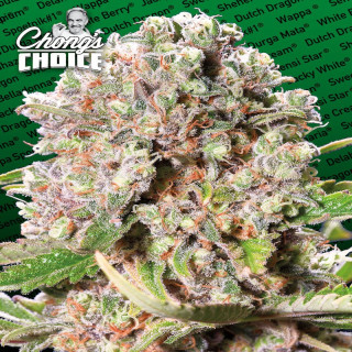 Mendocino Skunk - Chong's Choice 25,99 €