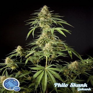 Philo skunk gokunk philosopher seeds