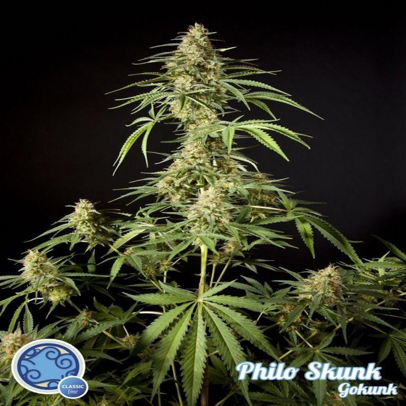 Philo skunk gokunk philosopher seeds