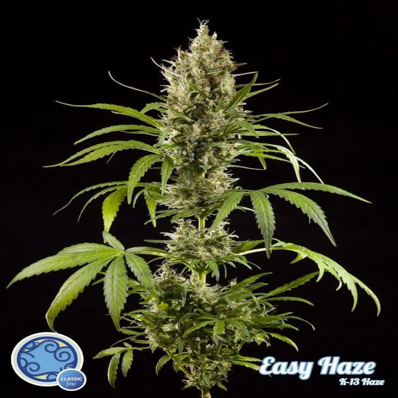 K13 haze easy philosopher seeds