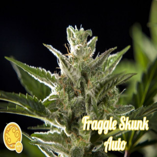 Fraggle Skunk Auto / Philosopher Seeds - 21,00 €
