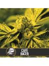Blimburn - Café Racer FEM
