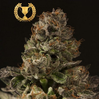 Strawberry Sour Diesel Devils Harvest 40,00 €