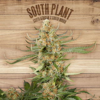 South plant the plant organic seeds