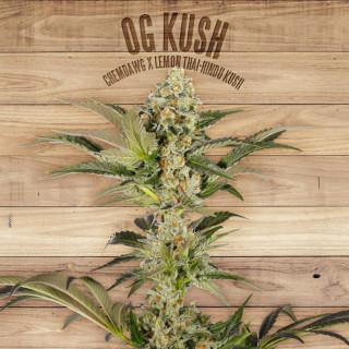 OG Kush The Plant Organic 30,00€