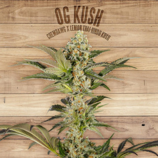 Og kush the plant organic seeds 30,00 €