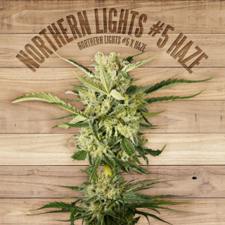 Northern lights 5 haze the plant organic seeds 42,00 €