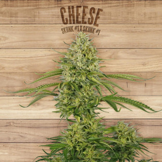 Cheese the plant organic seeds 21,00 €