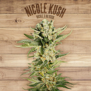 Nicole kush the plant organic seeds 42,00 €