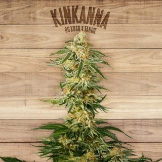 Kinkanna the plant organic seeds