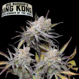 big buddha - King Kong