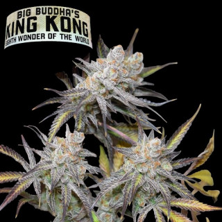 King Kong - Big Buddha 38,00 €