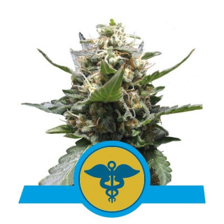 Royal medic CBD royal queen seeds