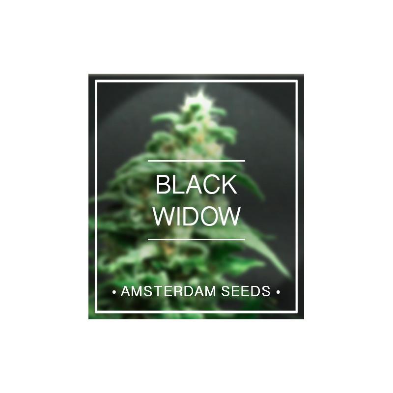 Amsterdam Seeds - Black Widow FEM 20,00€
