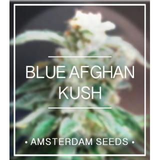 Amsterdam Seeds - Blue Afghan Kush FEM 20,00€