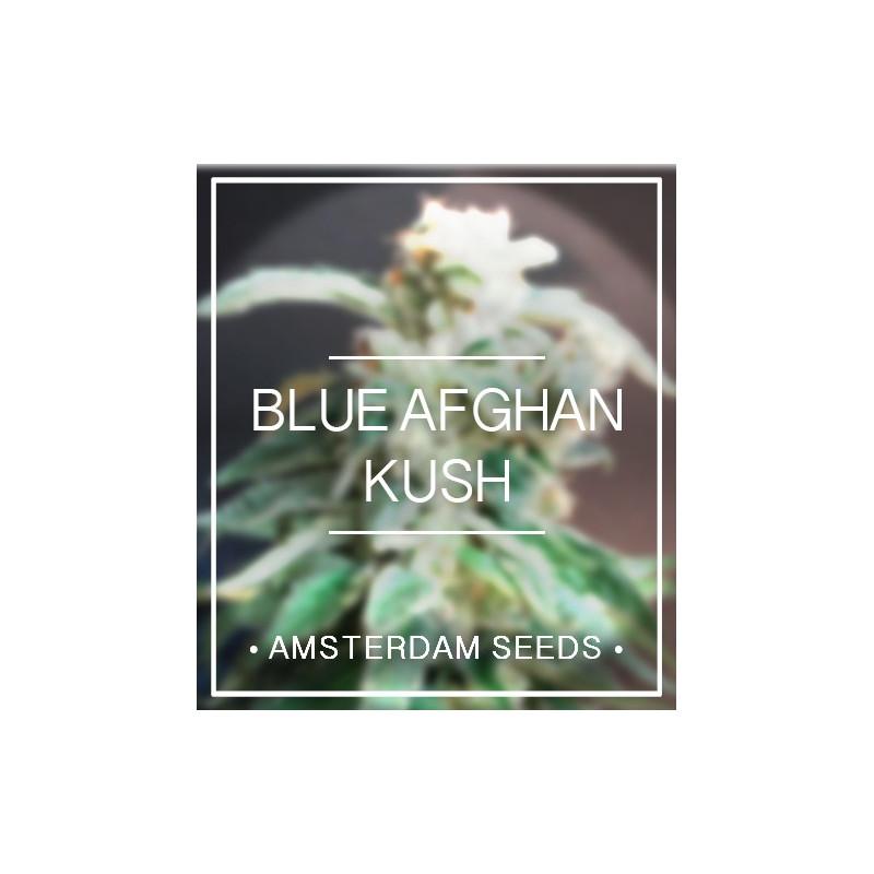 Blue afghan kush amsterdam seeds 20,00€