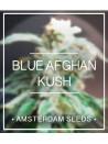Blue Afghan Kush - Amsterdam Seeds 20,00€