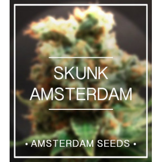 Amsterdam Seeds - SKUNK Amsterdam FEM 27,00€