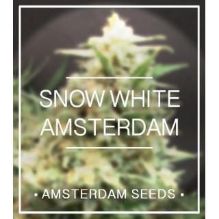 Amsterdam Seeds - Snow White Amsterdam FEM 33,00€