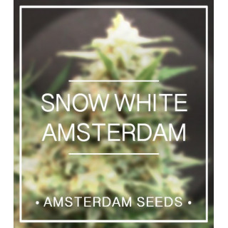 Snow white amsterdam seeds 33,00 €