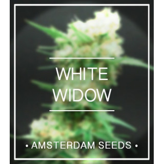 White widow amsterdam seeds 27,00 €