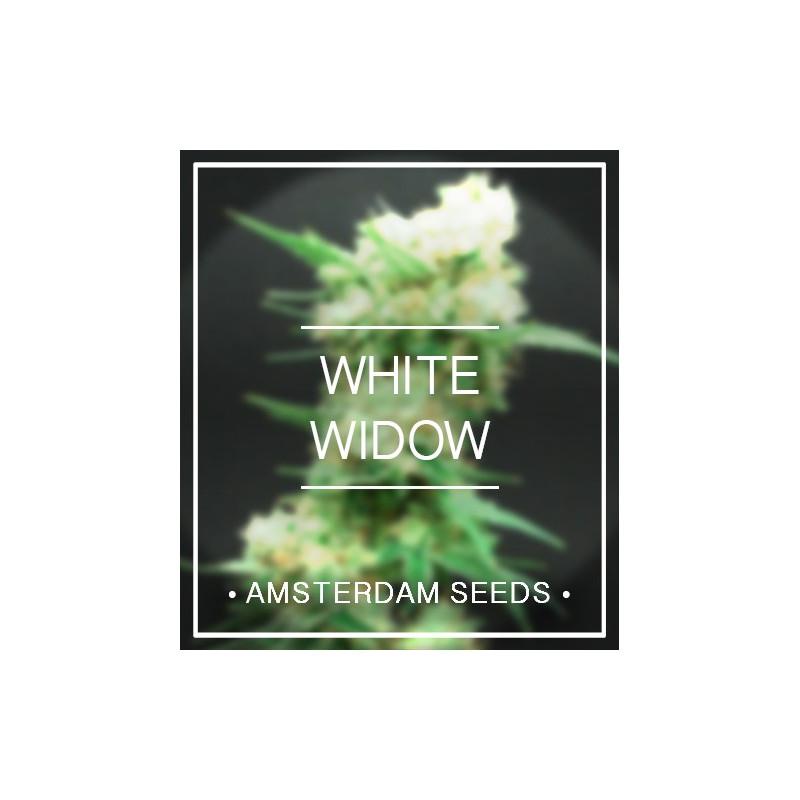 Amsterdam Seeds - White Widow FEM 27,00€