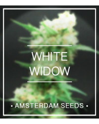 White Widow - Amsterdam Seeds 27,00 €