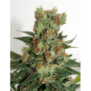Fuel og ripper seeds 21,00 €