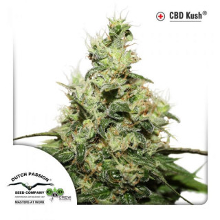 CBD Kush Dutch Passion 29,90 €