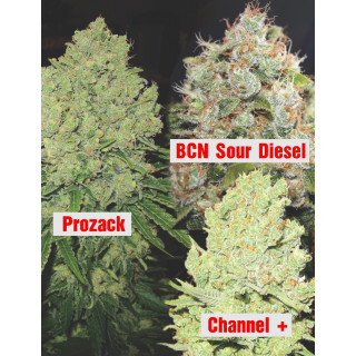 Collection 1 Medical Seeds