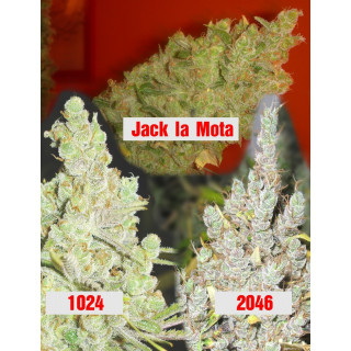 Collection 2 Medical Seeds 60,00 €