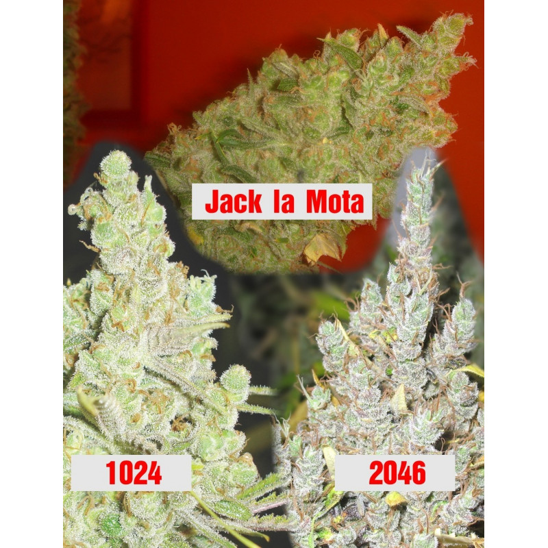 Collection 2 Medical Seeds