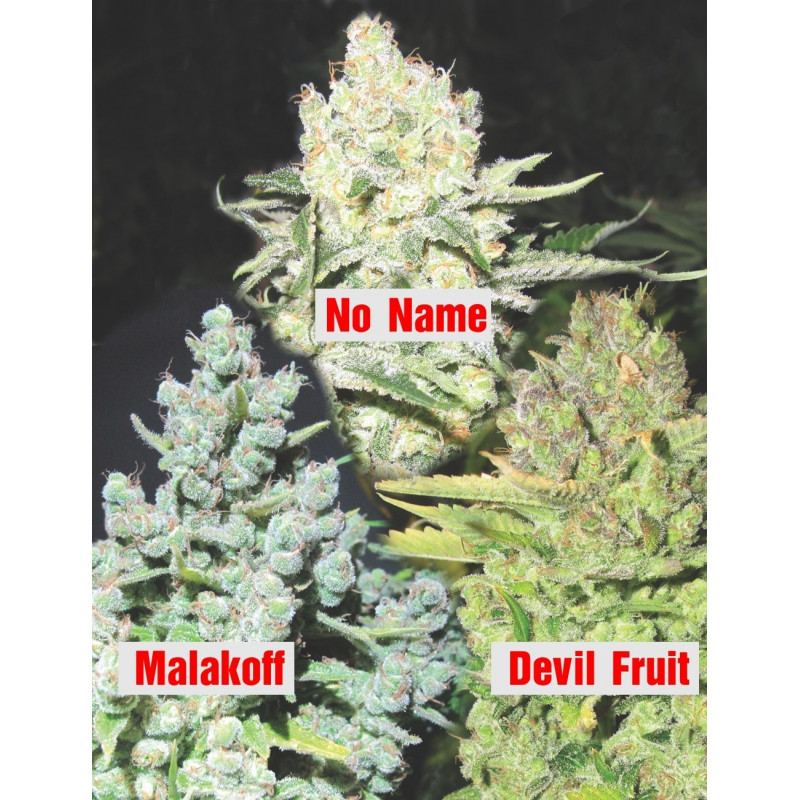 Collection 4 Medical Seeds