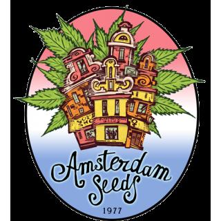 Amsterdam Seeds - Big Dutch Bud FEM 27,00€
