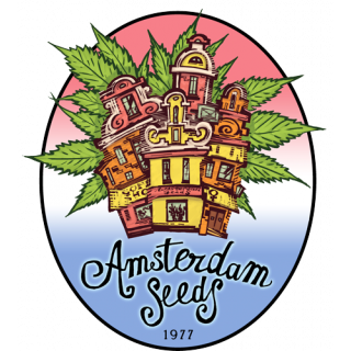 Big Dutch Bud - Amsterdam Seeds 27,00 €