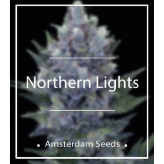 Northern Lights - Amsterdam Seeds 44,00 €