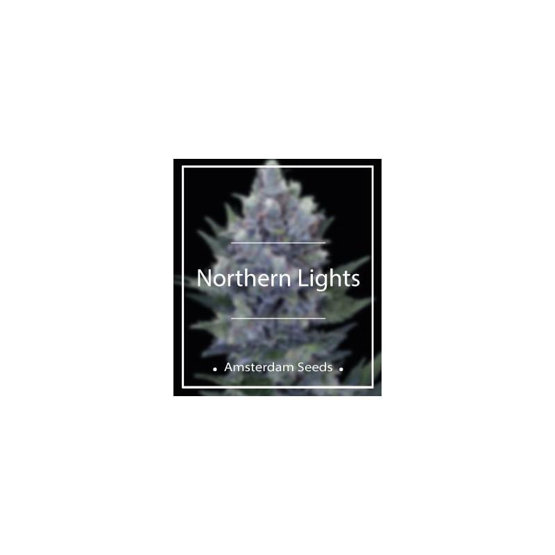 Northern Lights - Amsterdam Seeds 20,00€