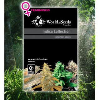 Indica collection féminisées world of seeds 48,00 €