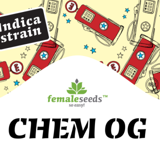 Chem OG female seeds féminisée 28,00 €