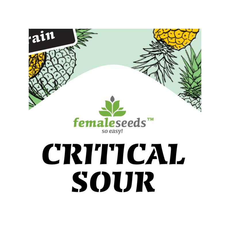 Critical sour female seeds féminisée