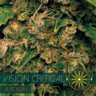 Vision critical auto vision seeds 17,50€