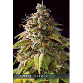 Caramel monster vision seeds féminisée 22,50€