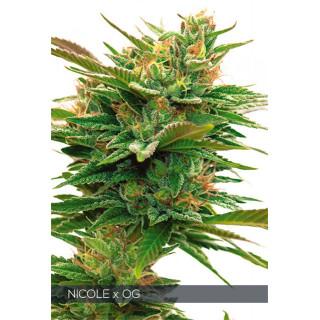 Nicole x OG vision seeds féminisée 32,50€