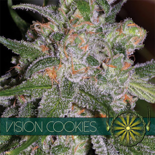 Vision cookies vision seeds féminisée 22,50€