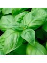 Basilic grand vert kokopelli sachet de 200 graines 3,40€