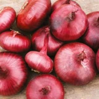 Oignons rouge de Genève kokopelli sachet de 2 gr