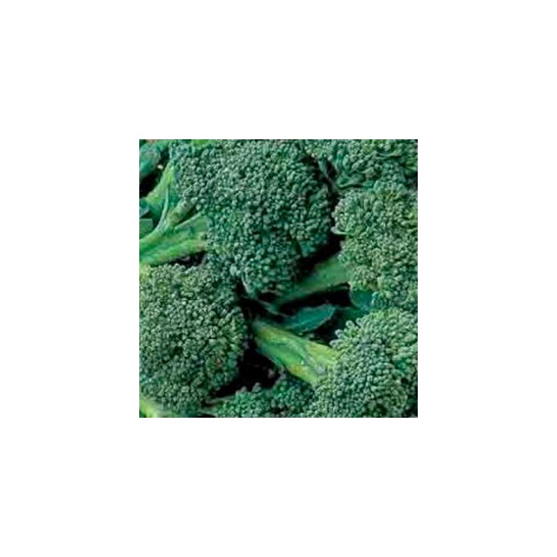 Choux brocolis à jets verts sachet de 200 graines
