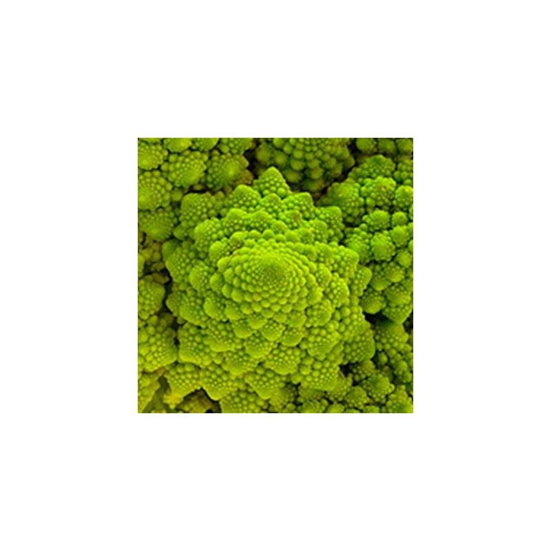 Choux brocolis romanesco sachet de 200 graines 3,40€