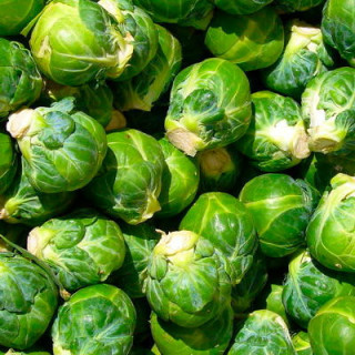 Choux de Bruxelles sélection de sativa sachet 200 graines